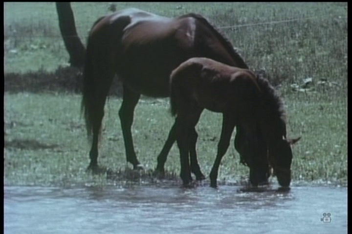 Song of the Horse screenshot